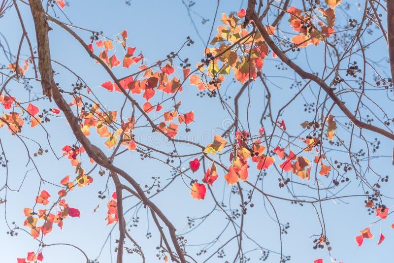 Colore cambiante durante la stagione di caduta a Houston, il Texas, U.S.A. fotografie stock libere da diritti