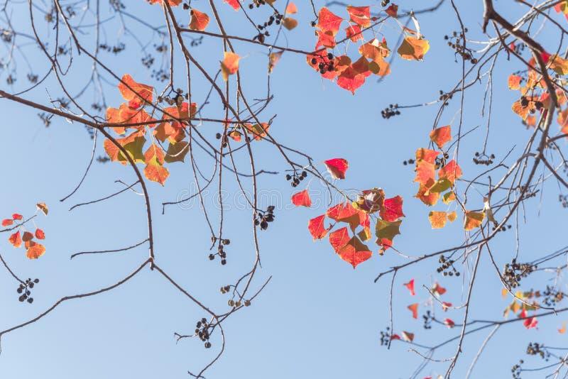 Colore cambiante durante la stagione di caduta a Houston, il Texas, U.S.A. fotografia stock
