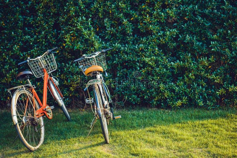 Colore d'annata della bicicletta con la parete dell'albero immagini stock
