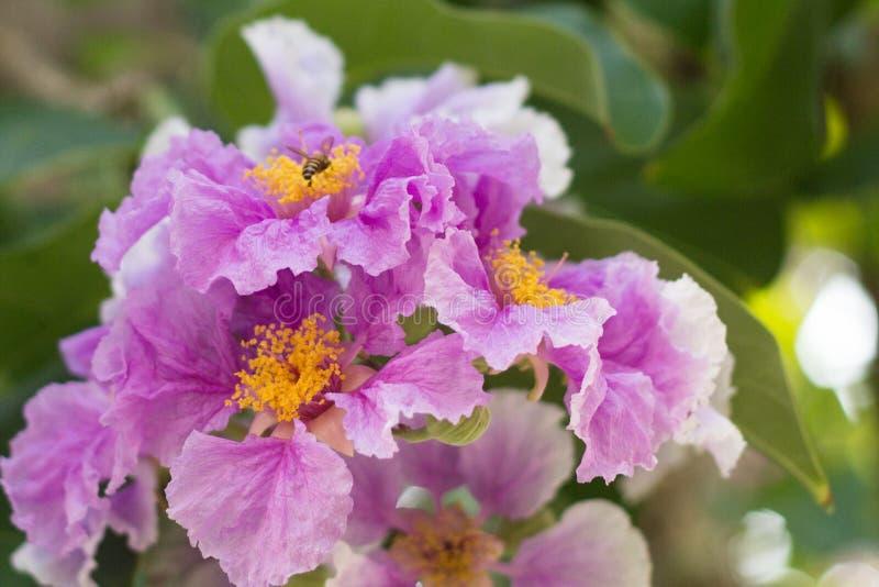 Colore del fiore fotografia stock libera da diritti