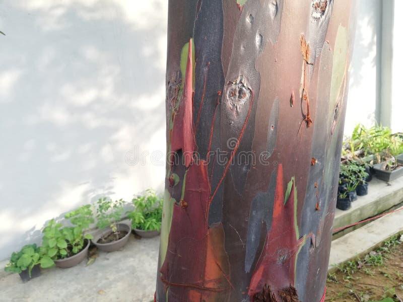 Colore dell'albero fotografia stock