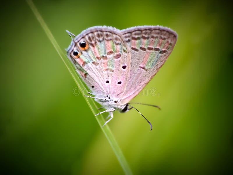 Colore dell'arcobaleno della farfalla fotografie stock libere da diritti