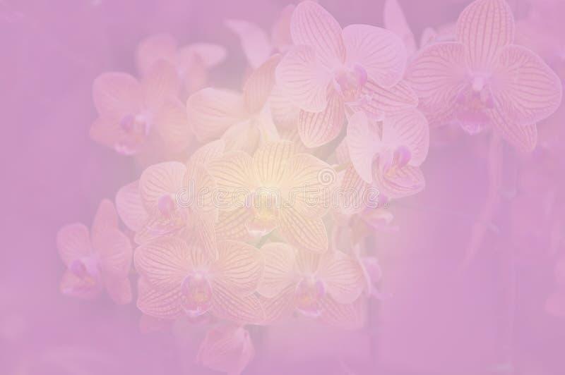 Colore dell'orchidea e stile morbidi della sfuocatura fotografie stock