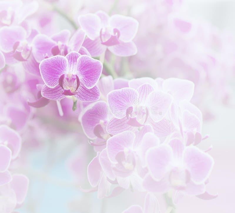 Colore dell'orchidea rosa e stile morbidi della sfuocatura fotografie stock