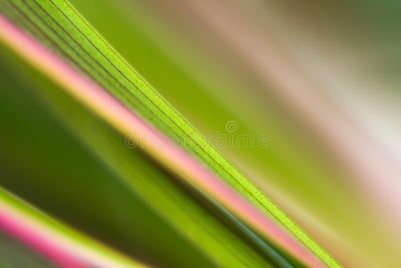 Colore della linea della natura fotografia stock