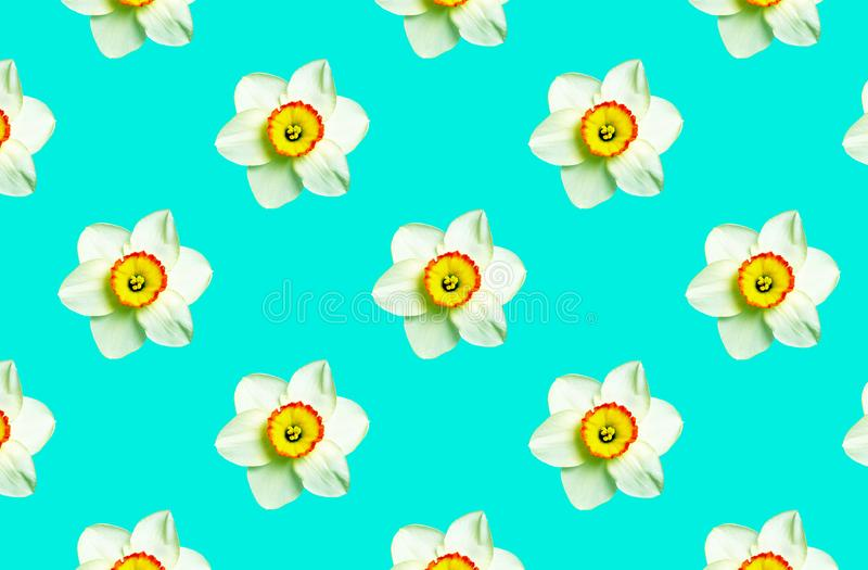 Colore della menta ornamento del narciso dei fiori sulla menta Priorit? bassa floreale naturale Modello dei fiori della molla fotografia stock