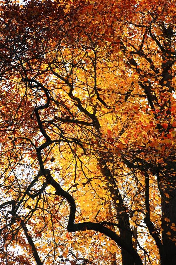 Colore di autunno immagine stock