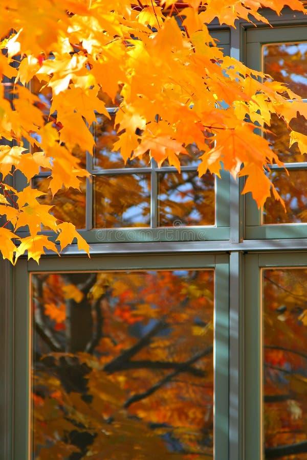 Colore di autunno dalla finestra fotografia stock libera da diritti