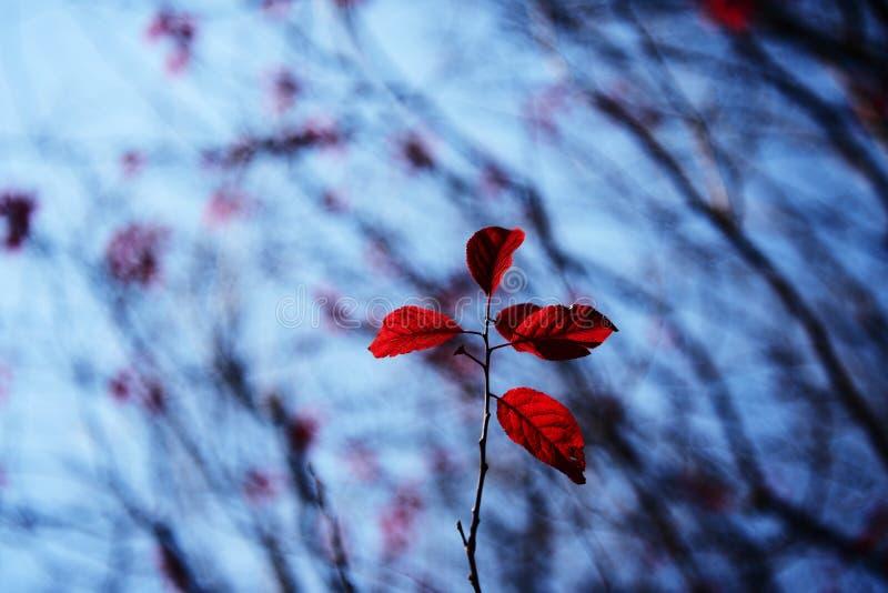 Colore di Winer fotografia stock