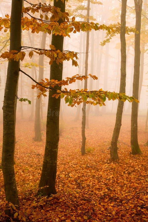 colore giallo degli alberi fotografie stock