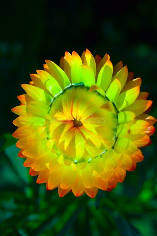 Download Colore giallo del fiore immagine stock. Immagine di bellezza - 216253