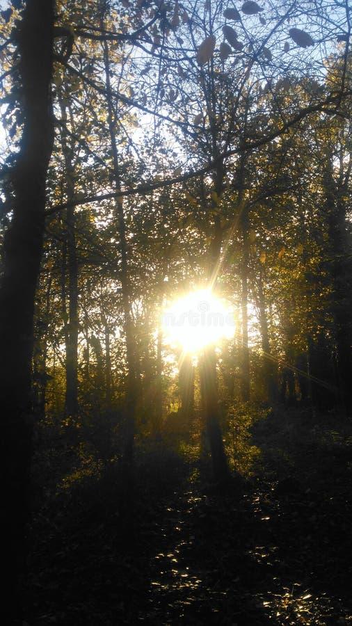 colore giallo dell'albero del foglio di caduta della priorità bassa di autunno fotografia stock libera da diritti