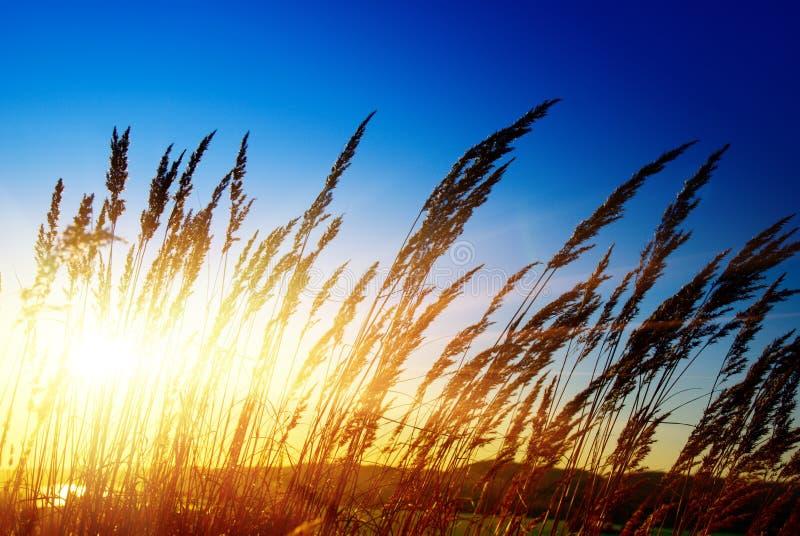 colore giallo dell'erba di autunno fotografie stock libere da diritti