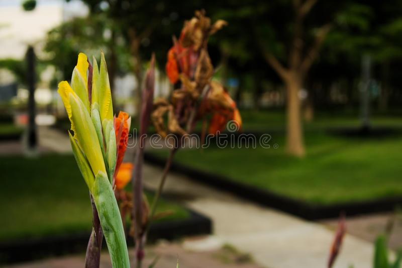 Colore giallo ed arancio immagine stock libera da diritti
