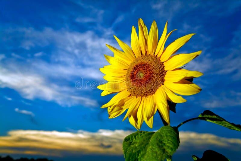Colore giallo ed azzurro fotografie stock libere da diritti