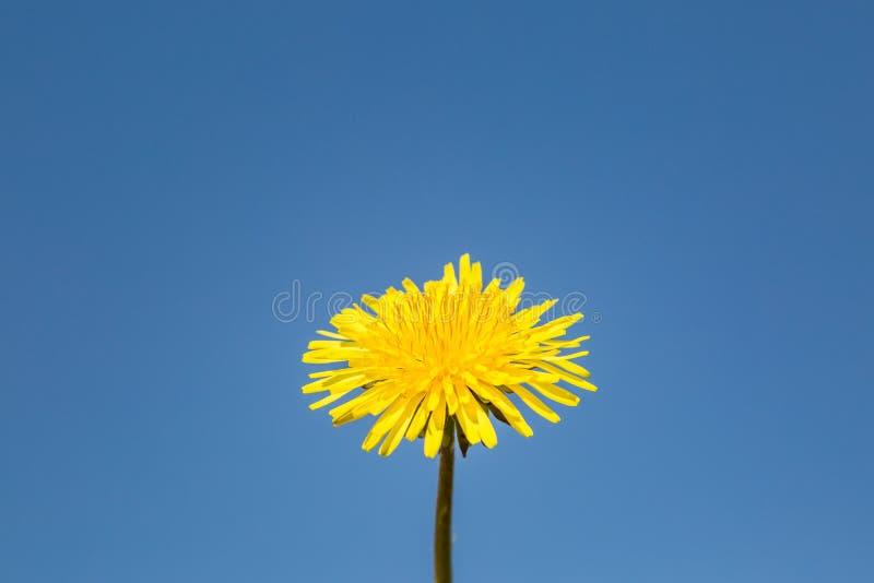 Colore giallo ed azzurro fotografie stock