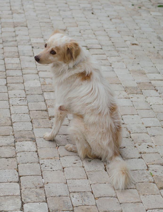 Colore macchiato della sabbia del cane sui precedenti dei lastricatori immagine stock libera da diritti