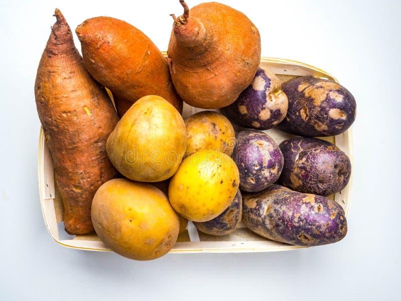 Colore misto giallo, patate arancio porpora, piccolo, tipo tozzo e a forma di dito di patata che può essere tutta la patata di er immagine stock libera da diritti