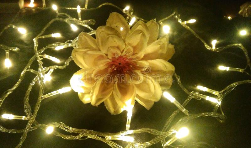 Colore romantico leggero del fiore fotografia stock libera da diritti