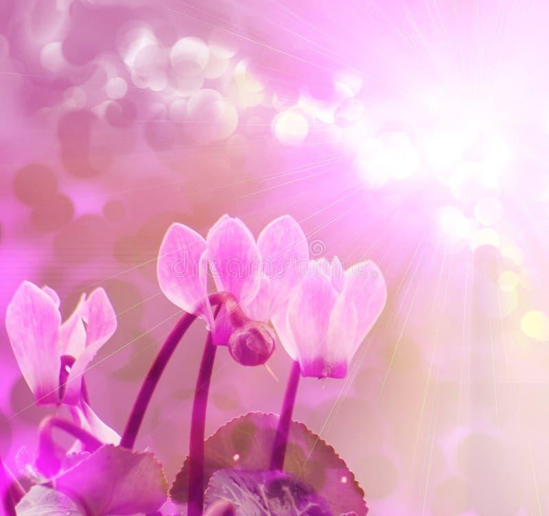 Colore rosa del fiore fotografie stock