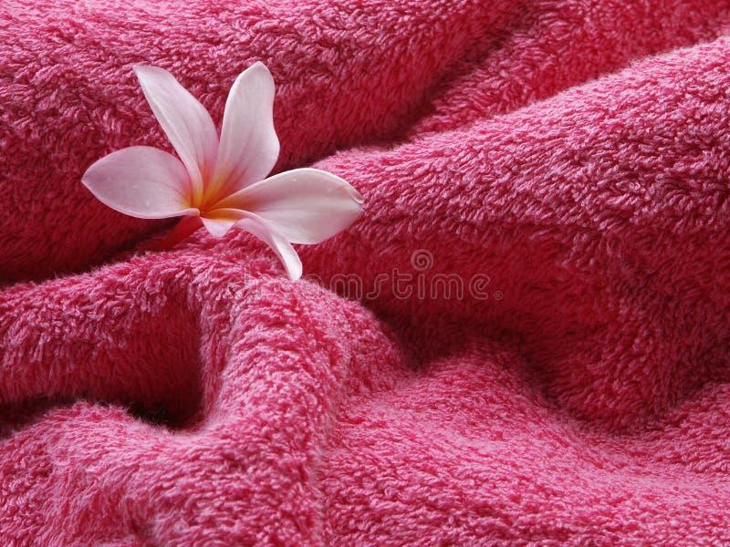 Colore rosa di tatto! immagini stock libere da diritti