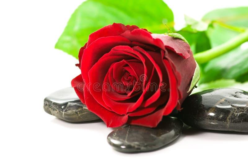 Colore rosso di rosa e pietre fotografie stock libere da diritti