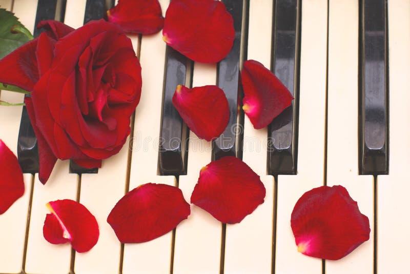Colore rosso di rosa, petali, tasti in bianco e nero del piano immagini stock