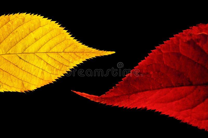 Colore rosso e fogli dell'oro fotografia stock