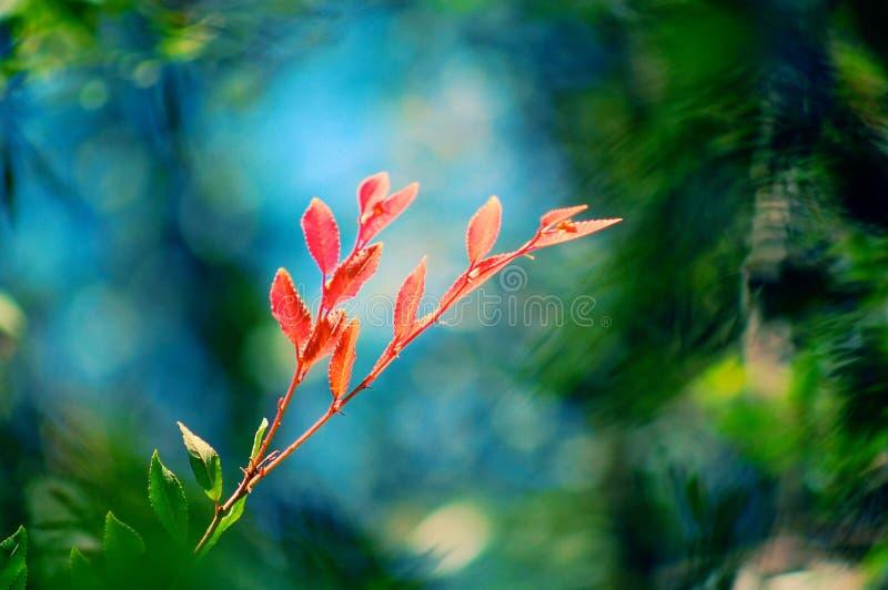 Colore rosso nel mare di verde fotografia stock libera da diritti