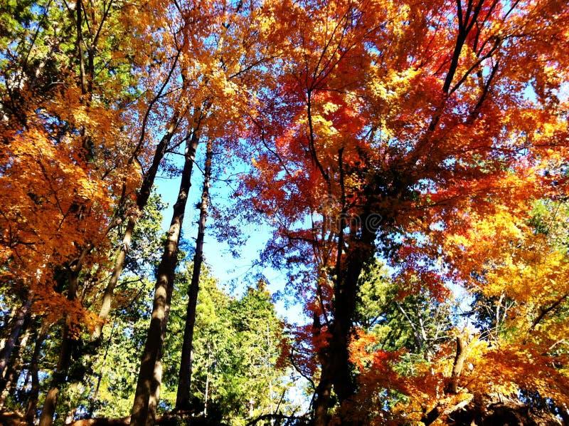 Colorea el árbol imagenes de archivo