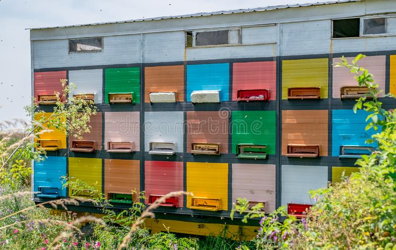 Colored bee hives in forest royalty free stock photos