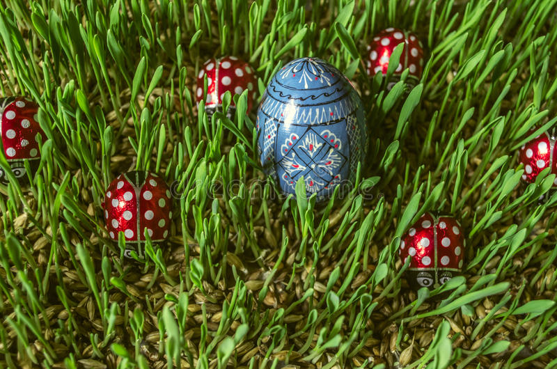 Colored blue egg and red ladybirds on green sprouted barley. Painted wooden blue egg with chocolate ladybirds on sprouted barley stock photo
