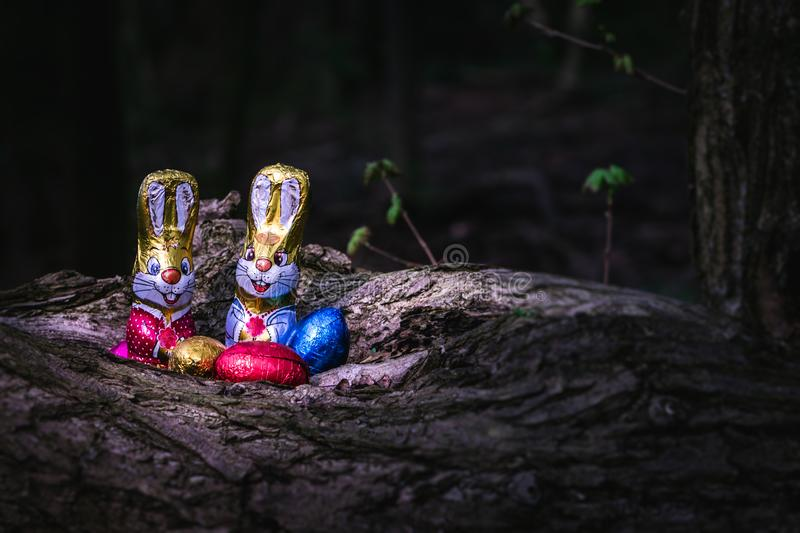 Chocolate Easter bunny and eggs hidden by a tree stock images