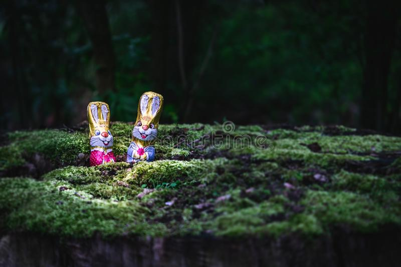 Chocolate Easter bunny and eggs hidden by a tree stock photography