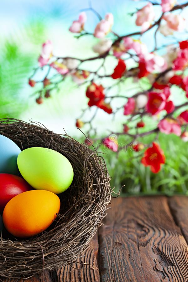 Colored Easter eggs in the nest on wooden table and springtime nature background stock images