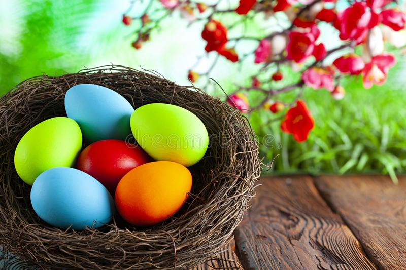 Colored Easter eggs in the nest on wooden table and springtime nature background royalty free stock photography