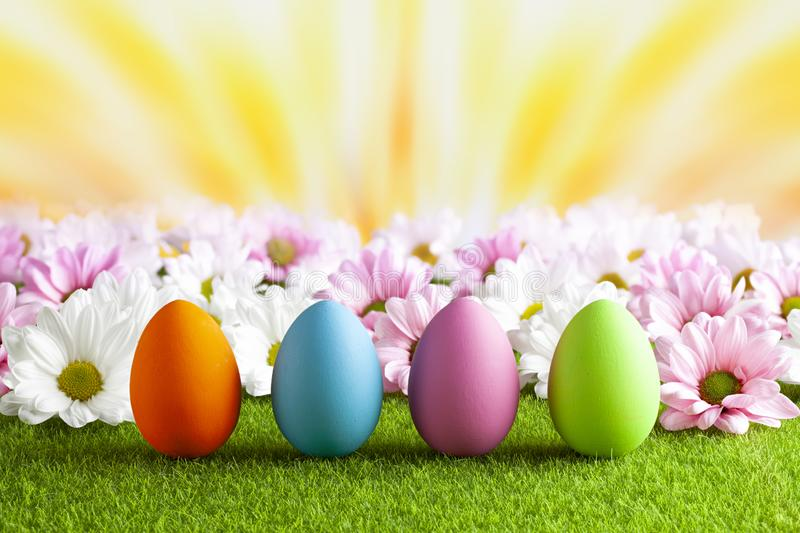 Colored Easter eggs and pink and white flowers on the grass stock photography