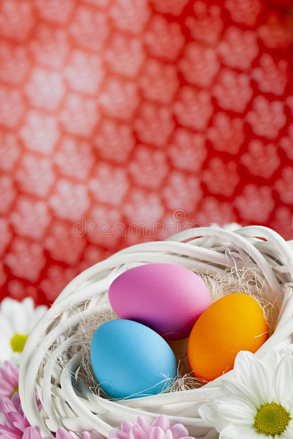 Colored Easter eggs in white nest on patterned background royalty free stock images