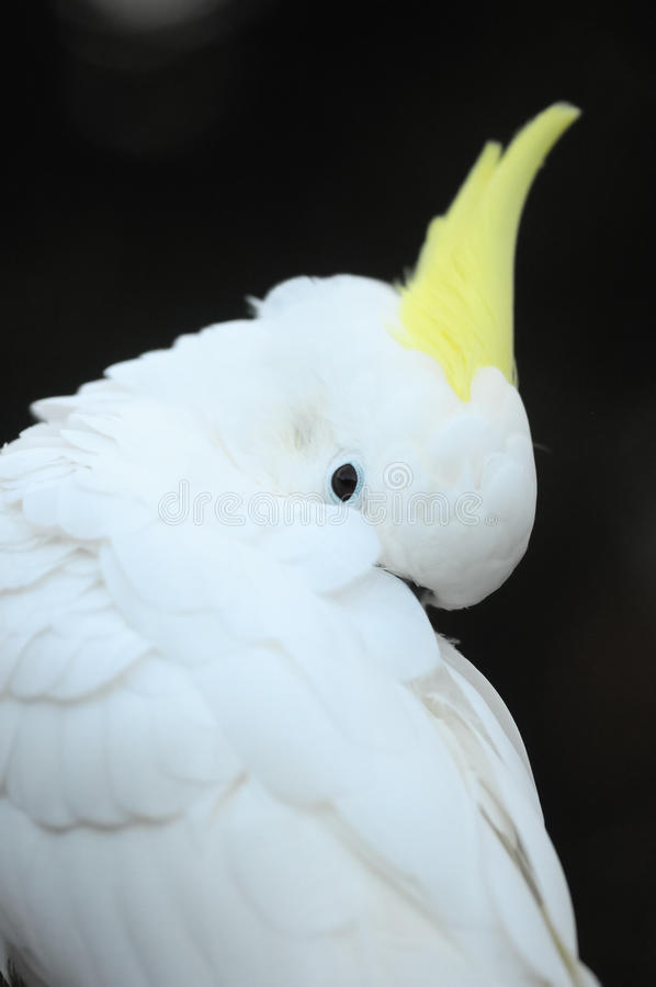 Download Colored Elegant Parrot Bird Stock Image - Image: 38357019