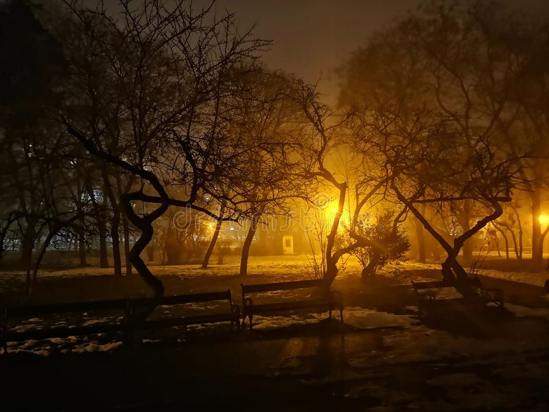 Colored evening in the park with light rays in the mist royalty free stock photo
