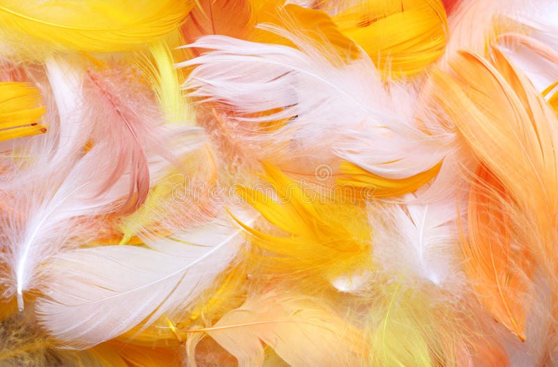 Colored feathers stock images