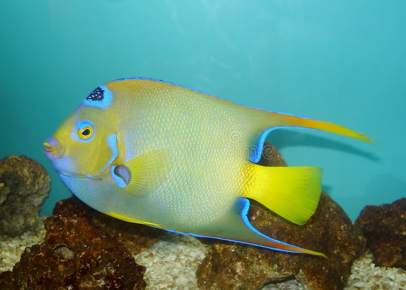 Colored fish stock image