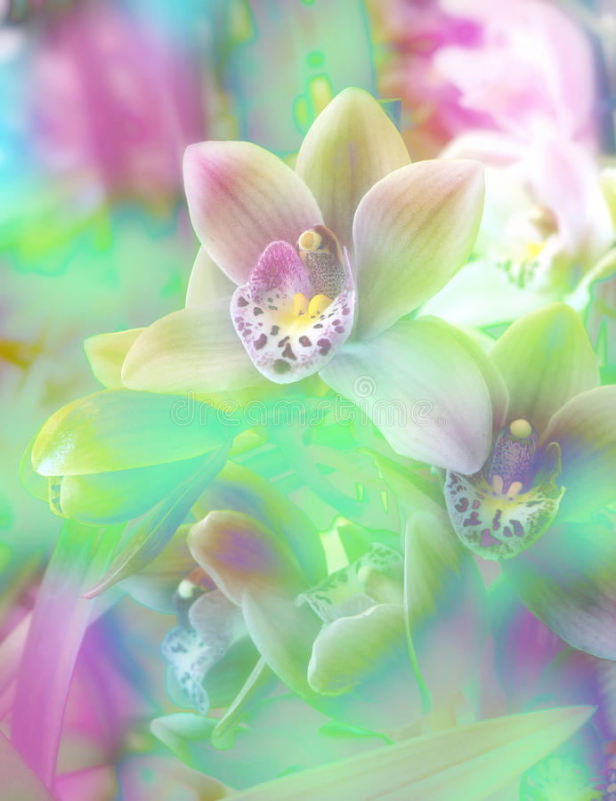 Colored floral background with orchid stock image