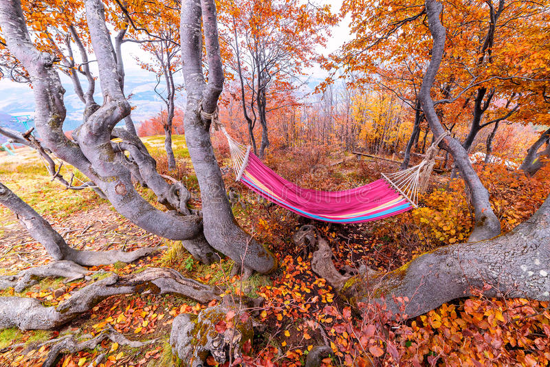 Colored hammock, autumn royalty free stock image