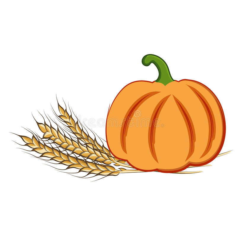 Colored hand drawing ripe pumpkin and wheat ears. Vector illustration of colored hand drawing ripe pumpkin and wheat ears isolated on a white background. EPS 10 royalty free illustration