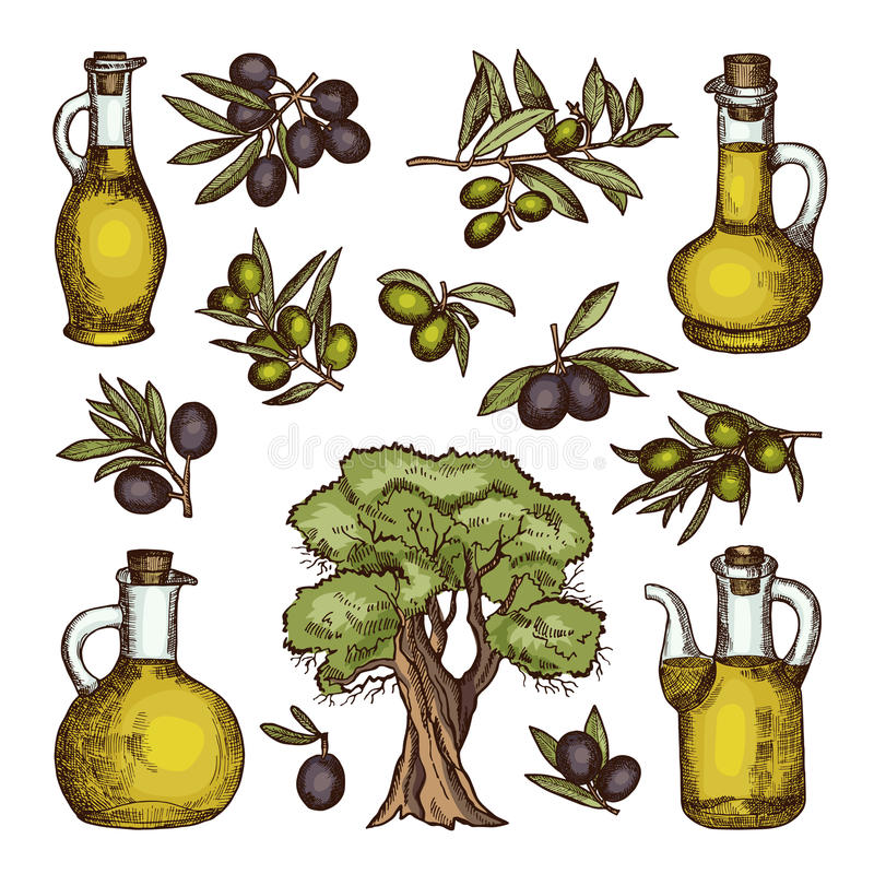 Colored illustrations of different olive products and ingredients. Vector hand drawn pictures isolated stock illustration