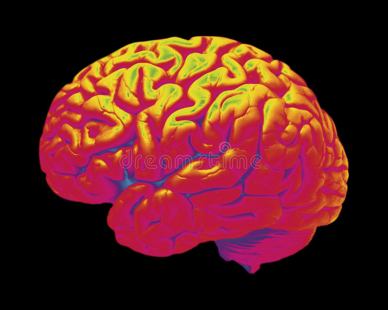 Colored image of human brain. Color image of hot human brain on black background stock images