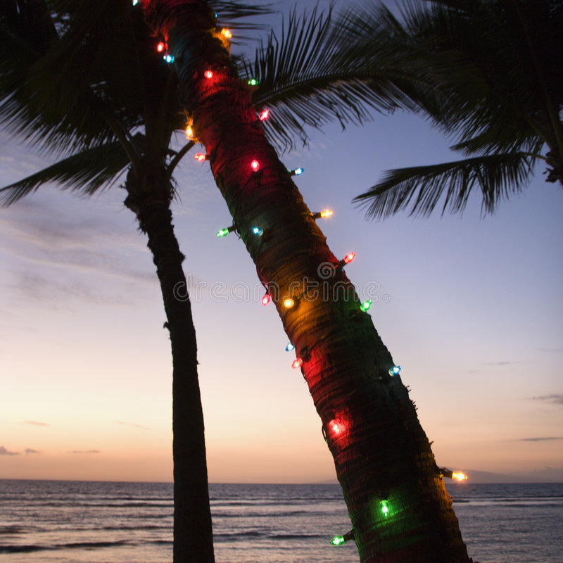 Colored lights on palm tree. Festive colored lights wrapped around trunk of palm tree at beach at sunset