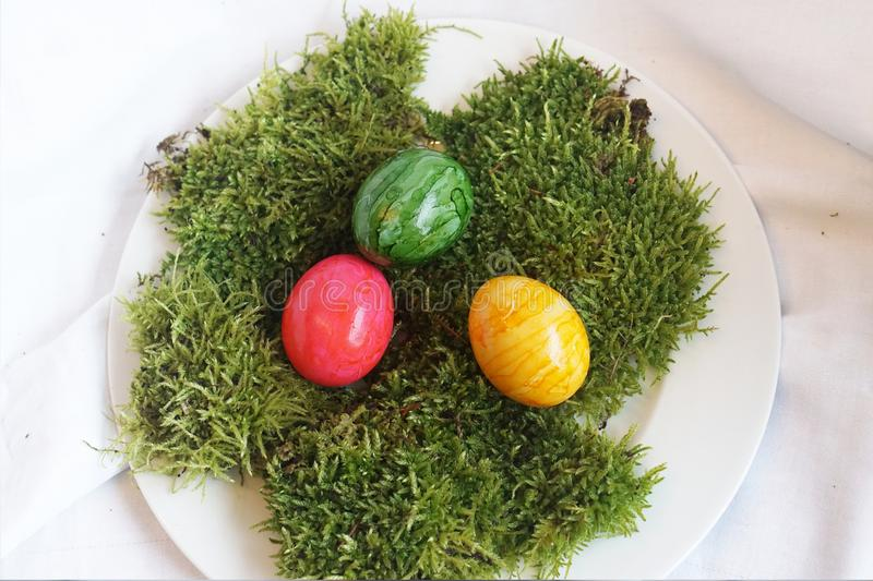 Colored real easter eggs on real green moss on white plate stock photo