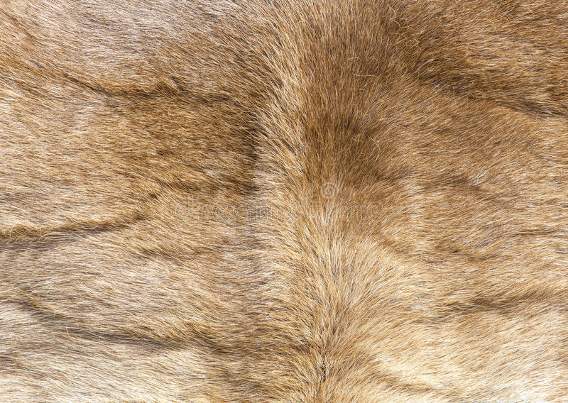 Colored reindeer fur texture. royalty free stock photos